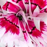 Blume 8.jpg