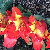 Blume 9.JPG
