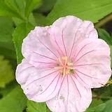 feine Blume.JPG
