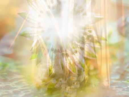 Fühle das Licht in dir und erkenne wie wunderbar du bist