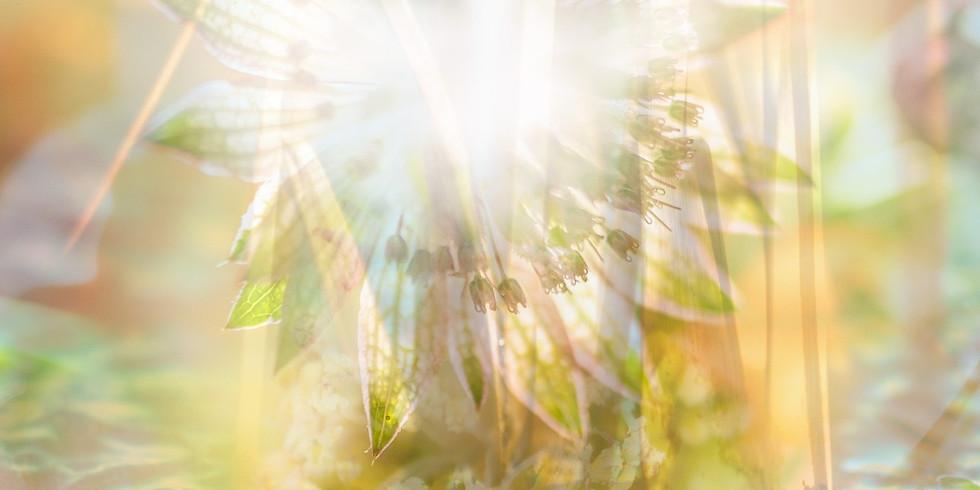 Engel und Chakra- Morgen Meditation: