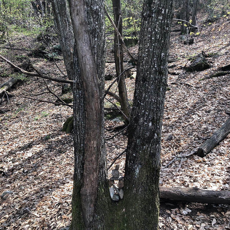 Verbinde dich mit den Baumwesen und lerne die Energie des Waldes kennen: