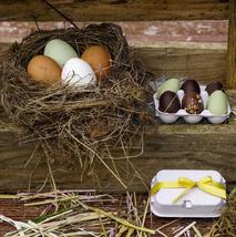 Æggebakke med 6 æg.png