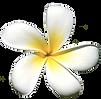 bali_blomst.png