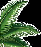 Palm Leaf 2.png