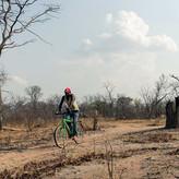 ZIMBABWE: RURAL ELECTRIFICATION MIGHT NOT FIX DEFORESTATION