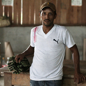 GUATEMALA'S VANISHING HARVEST