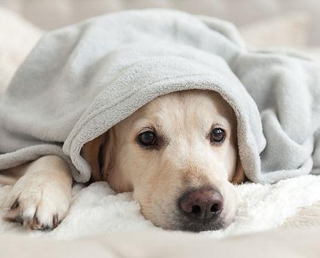 Smaller-dog-snuggled-up-sSQUARE-hutterst