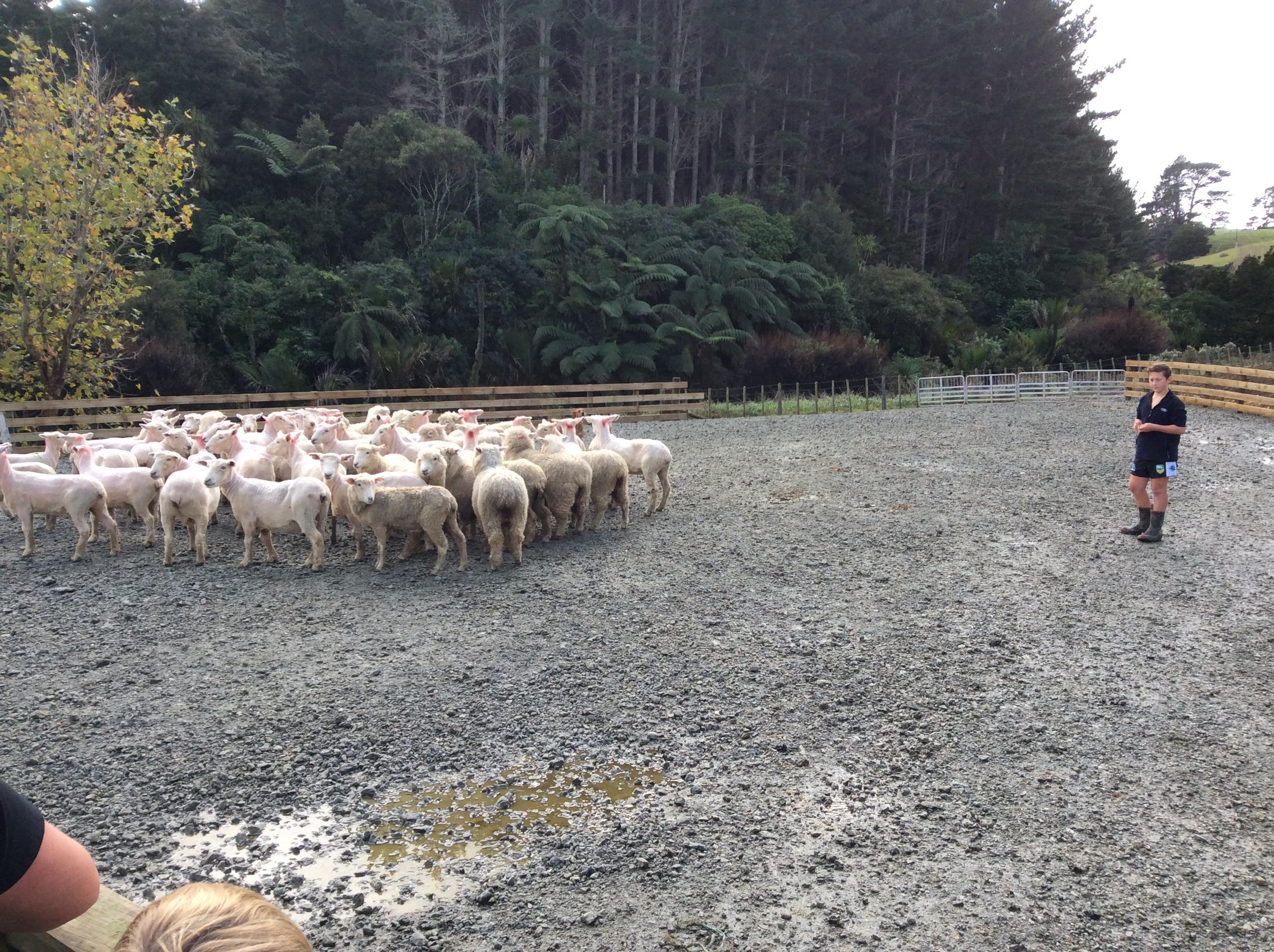 Berger Farm