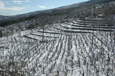 vini-wines-etna-sicily-s-spirito-01.jpg