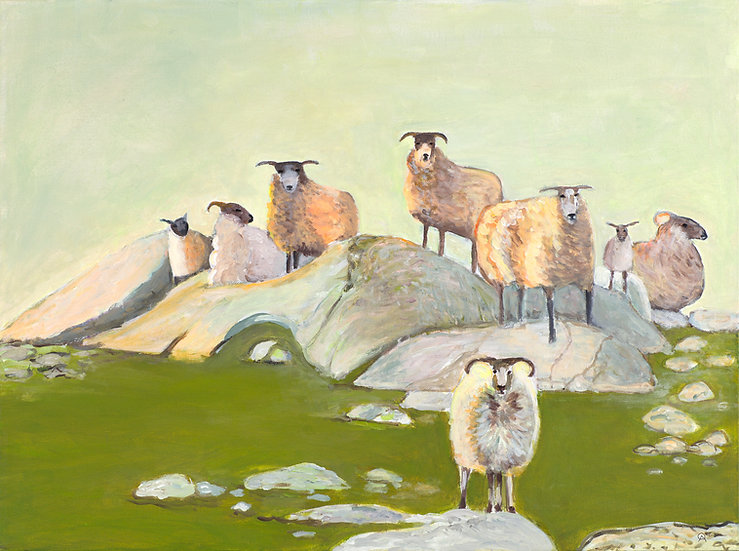 Gathering of Scottish Sheep on Smooth Rocks