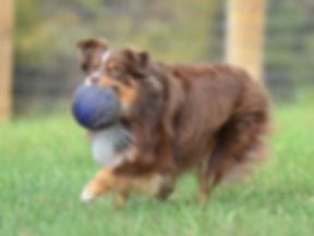 Ruger ball.JPG
