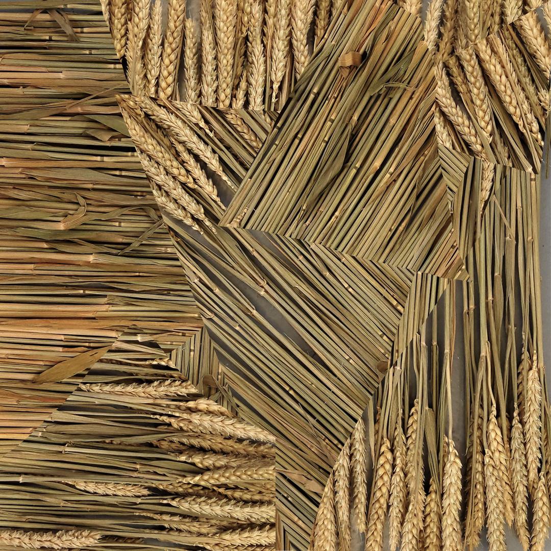 Fields of wheat cover.jpg