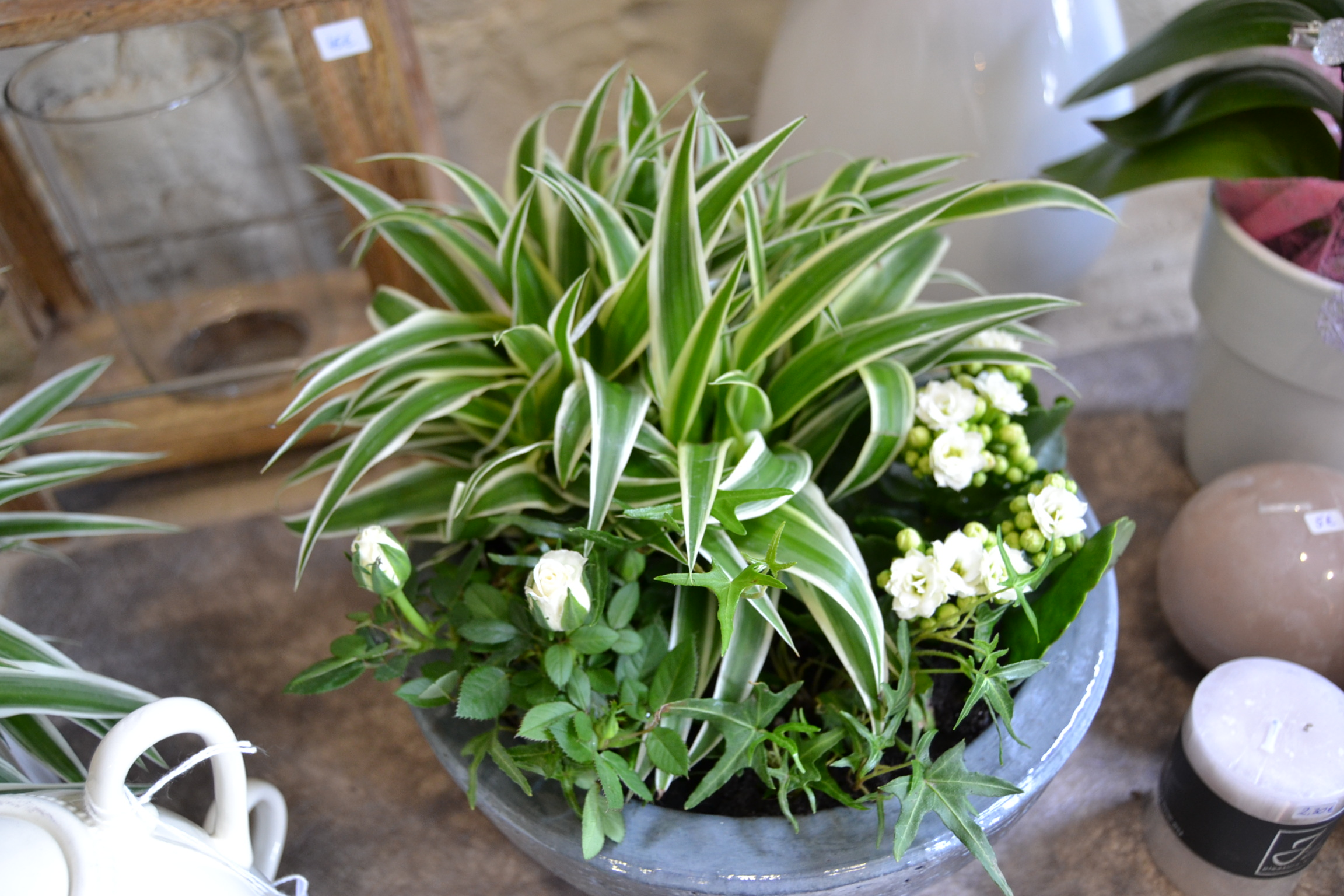 Montage plantes