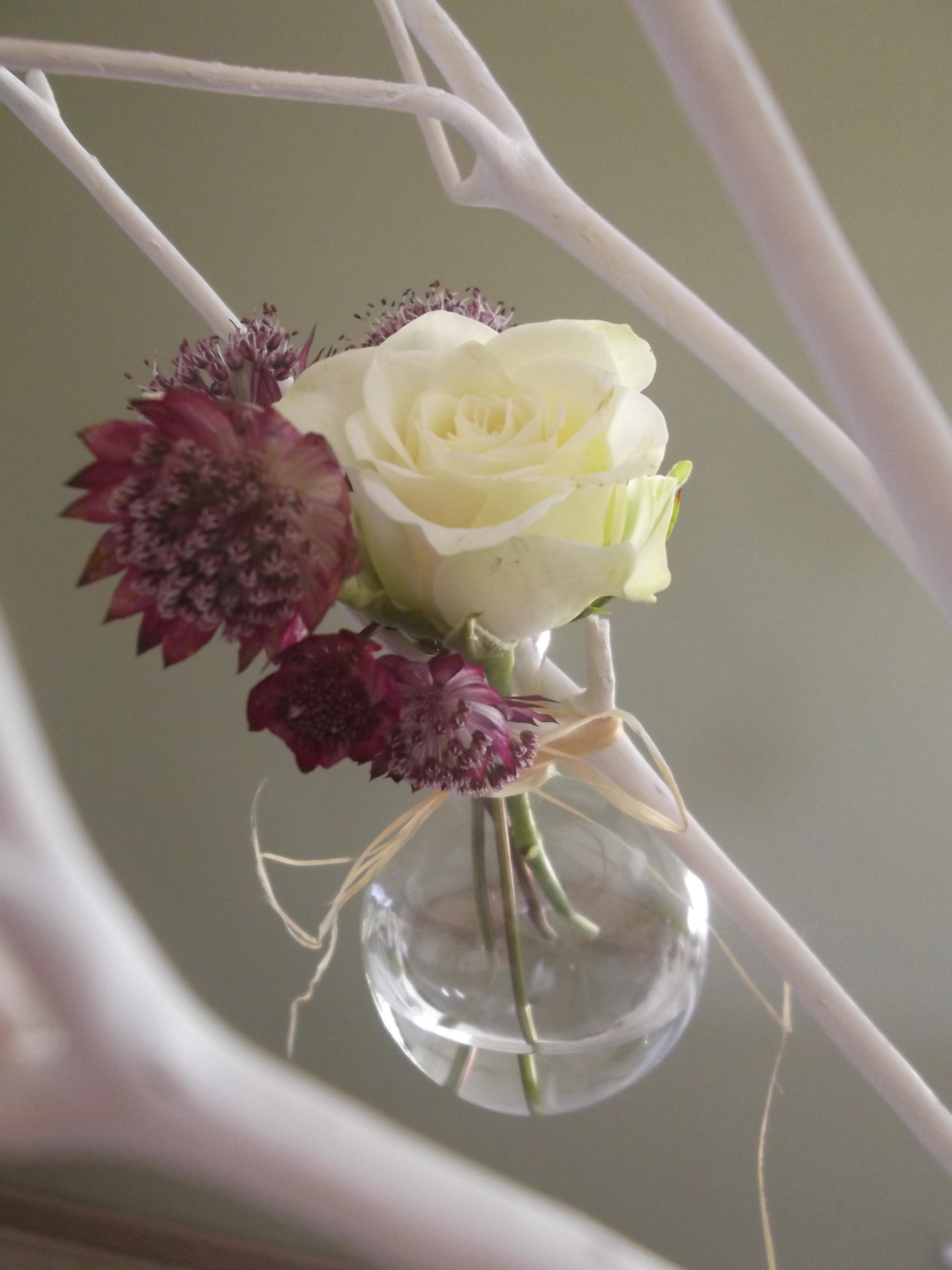 Soliflore rose