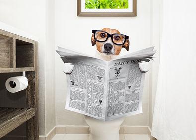 shutter dog 2 .jpg