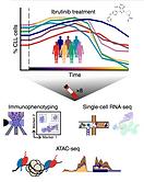 Chromatin profiles of CLL