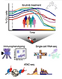 Chromatin mapping and single-cell immune profiling defines the temporal dynamics of ibrutinib drug response in chronic lymphocytic leukemia