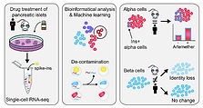 Single-cell RNA seq method developed to accurately quantify cell-specific drug effects in pancreatic islets
