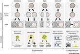 Multi-omics of single cells: Strategies and applications