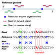 RRBSMAP: A fast, accurate and user-friendly alignment tool for reduced representation bisulfite sequencing