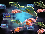 Structural cells are key regulators of organ-specific immune response
