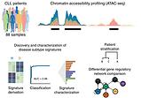 Chromatin accessibility maps of chronic lymphocytic leukaemia identify subtype-specific epigenome signatures and transcription regulatory networks