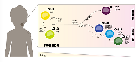 Single-cell atlas of LCH
