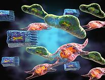 Immune regulation in structural cells
