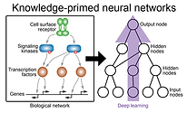 Knowledge-primed neural networks