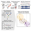 Single-cell DNA methylome sequencing and bioinformatic inference of epigenomic cell-state dynamics