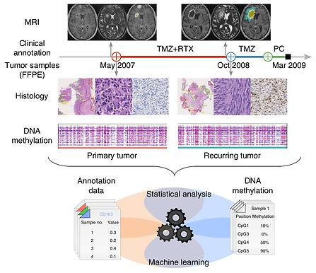 DNA methylation heterogeneity in glioblastoma