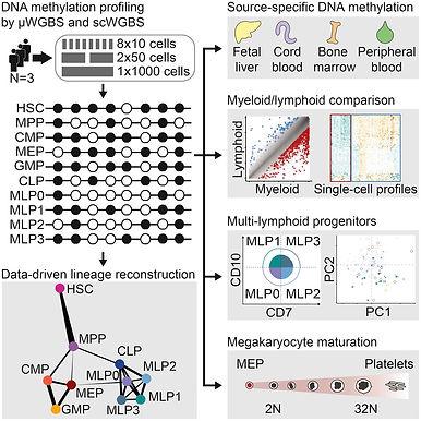 DNA methylation in human hematopoietic development