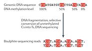 Analysing and interpreting DNA methylation data