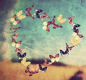 heart-shape-made-of-colorful-butterflies