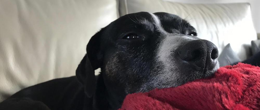 Luna rust na haar operatie