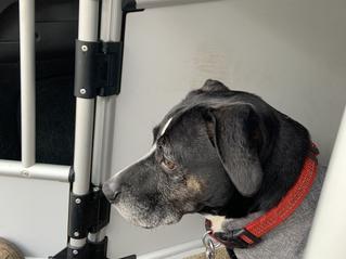 Wat als jouw hond een pootje verstuikt?