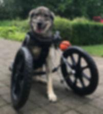 Jouw hond kan zitten in een VOORwiel rolwagen