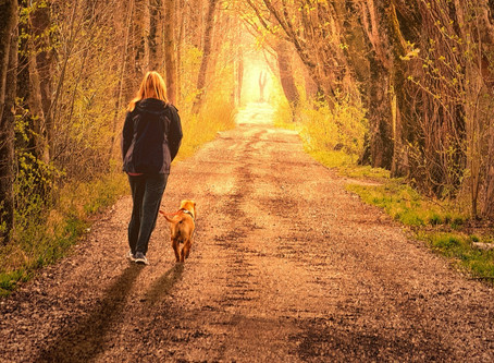 Hoe leer ik mijn hond met een rolstoel wandelen?