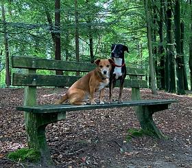 Toetsie en Luna in het bos