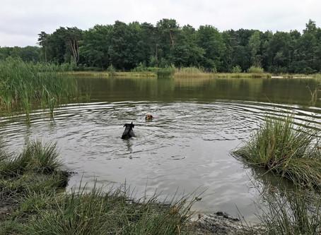 Zwemmen met een brace van Pro4Paws, dat kan!