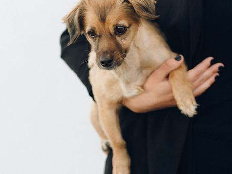 5 TIPS om jouw revaliderende hond te helpen
