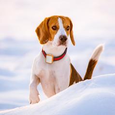 Tack_Dog_snow2_edited.jpg