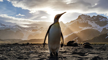 Save up to 20% on Antarctic Cruises