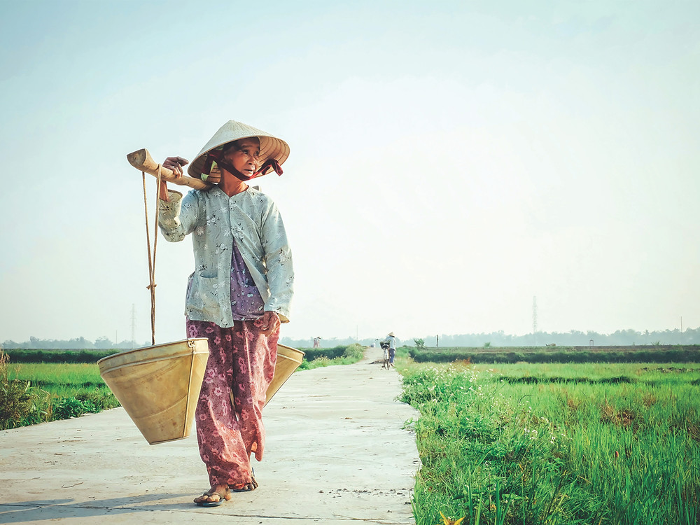 A woman carries supplies through a rice paddy, Vietnam