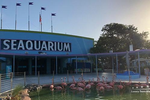 Miami Seaquarium General Admission