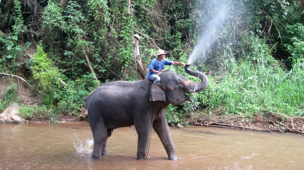 Mahout plays with an elephant in a river, Thailand