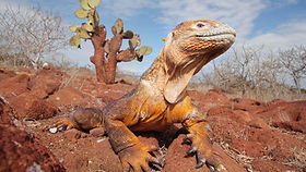 Exotic wildlife only seen in the Galapagos Islands and Ecuador
