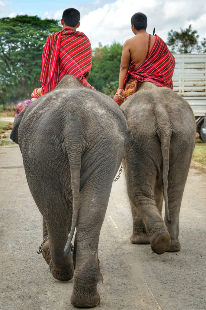 Two Thai mahouts ride their elephants on a paved road in rural Thailand