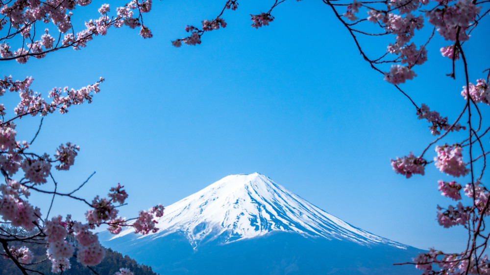 Mt Fuji, Japan seen through cherry blossoms